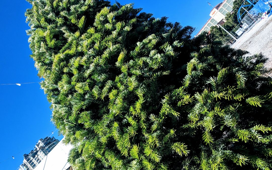 How To Preserve Your Christmas Tree And Keep It Fresh