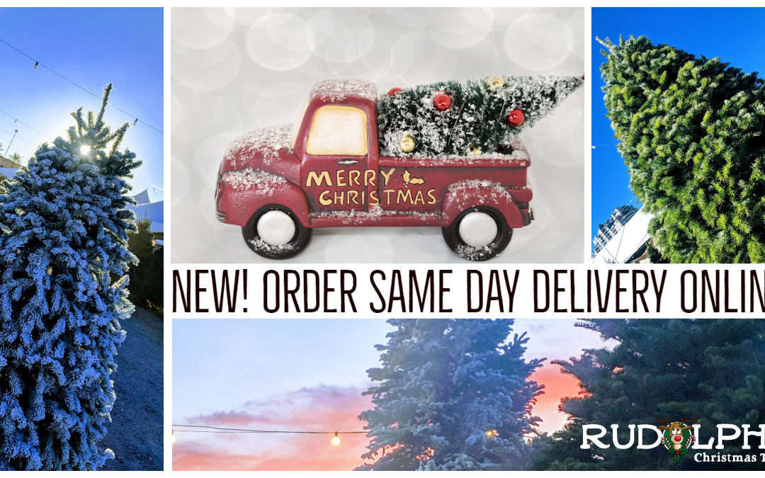 Order Online Same-Day Christmas Tree Delivery | Las Vegas, NV Only